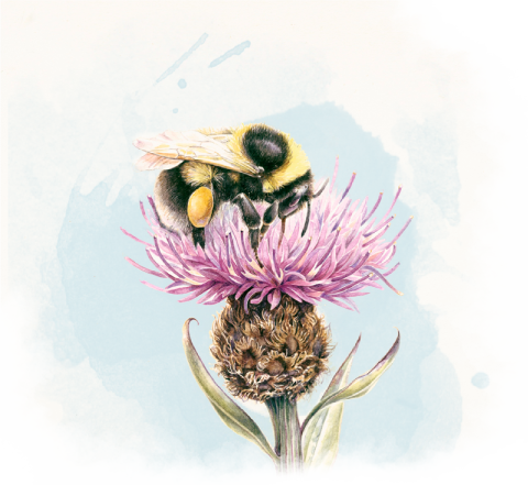 Bee sitting on a thistle
